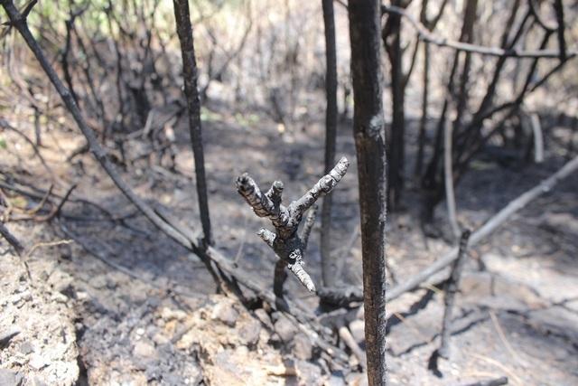 Phủ xanh hơn 35 ha rừng sau vụ cháy rừng kinh hoàng - 2