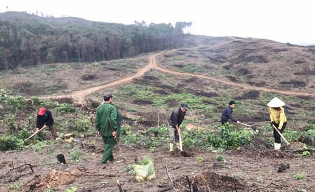 Phủ xanh hơn 35 ha rừng sau vụ cháy rừng kinh hoàng - 3