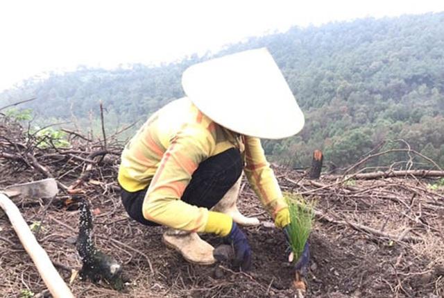 Phủ xanh hơn 35 ha rừng sau vụ cháy rừng kinh hoàng - 4