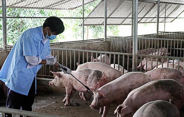 Việt Nam đề nghị Hoa Kỳ giúp sản xuất vắc xin dịch tả lợn châu Phi - 1