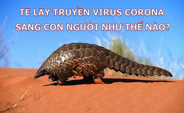 Phát hiện đầy bất ngờ về nguồn gốc của virus corona mới - 3