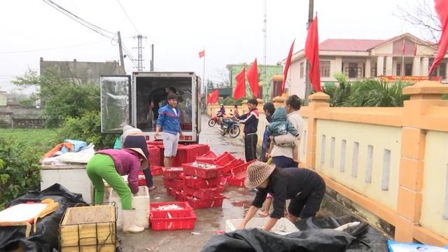 Ngư dân Quảng Bình trúng đậm cá trích ngày mở biển - 5