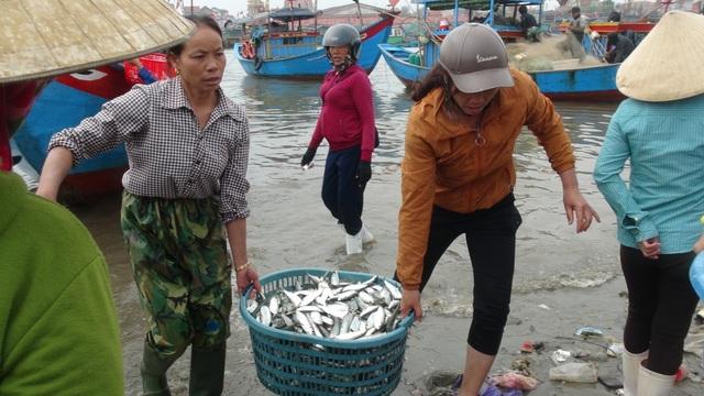 Ngư dân Quảng Bình trúng đậm cá trích ngày mở biển - 4
