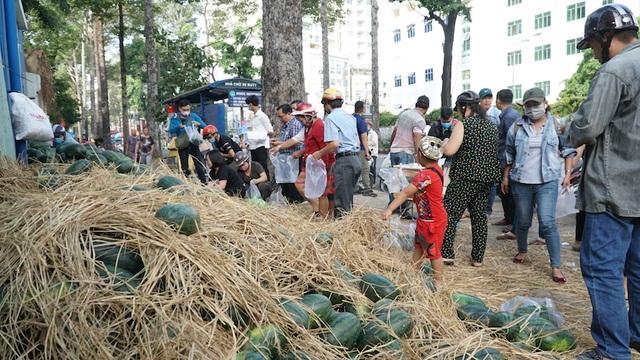 Hàng chục tấn dưa hấu được giải cứu trong mùa dịch Corona - 1