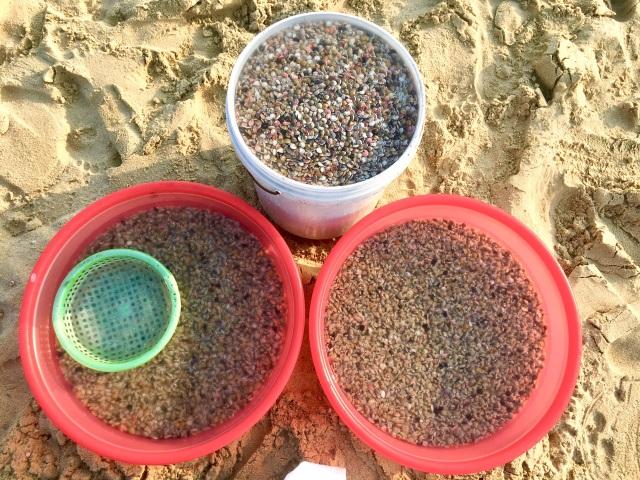 Đà Nẵng: Ngư dân thu tiền triệu mỗi ngày nhờ cào ốc gạo - 3