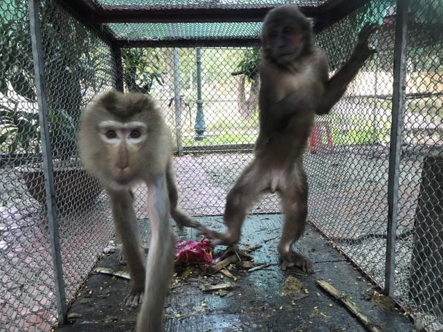Thả 2 cá thể khỉ quý hiếm bị nuôi nhốt về môi trường tự nhiên - 1