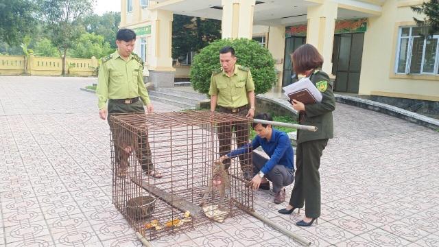 Thả 2 cá thể khỉ quý hiếm bị nuôi nhốt về môi trường tự nhiên - 2