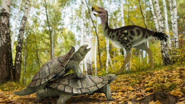 Phát hiện dạng sống kỳ quái của loài rùa đất cổ đại - 1