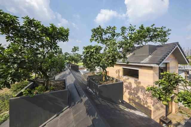 Biệt thự ở Hà Nội gây ngỡ ngàng khi trồng cả vườn cây ăn quả trên mái nhà - 8