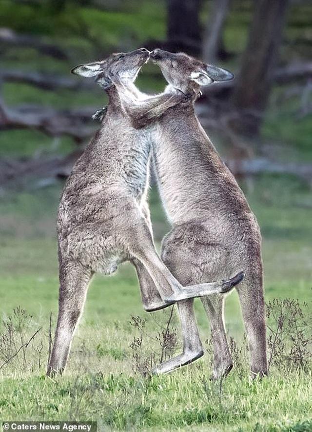 Mỉm cười trước những khoảnh khắc âu yếm trong thế giới động vật - 4