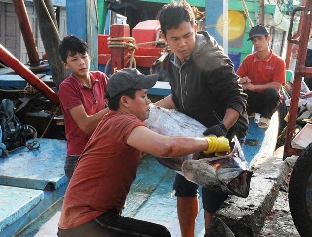 """Bình Định: Ngư dân """"đỏ mắt"""" tìm bạn thuyền vươn khơi - 1"""