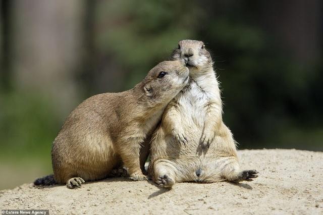 Mỉm cười trước những khoảnh khắc âu yếm trong thế giới động vật - 7