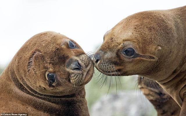 Mỉm cười trước những khoảnh khắc âu yếm trong thế giới động vật - 9