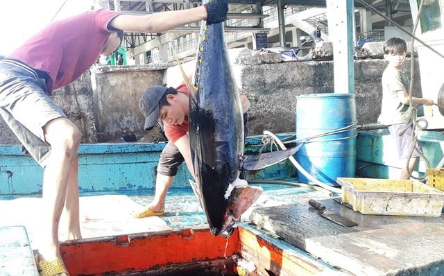 """Bình Định: Ngư dân """"đỏ mắt"""" tìm bạn thuyền vươn khơi - 2"""