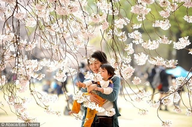 5 quy tắc dạy con kỷ luật, biết kiểm soát cảm xúc của mẹ Nhật - 1