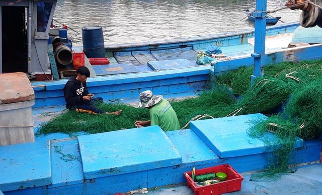 """Bình Định: Ngư dân """"đỏ mắt"""" tìm bạn thuyền vươn khơi - 4"""