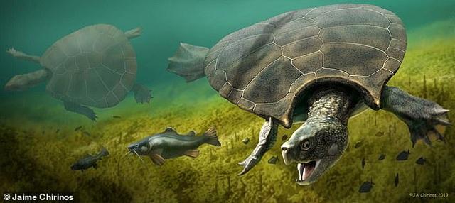 Con rùa lớn nhất mọi thời đại từng tồn tại từ 10 triệu năm trước - 1