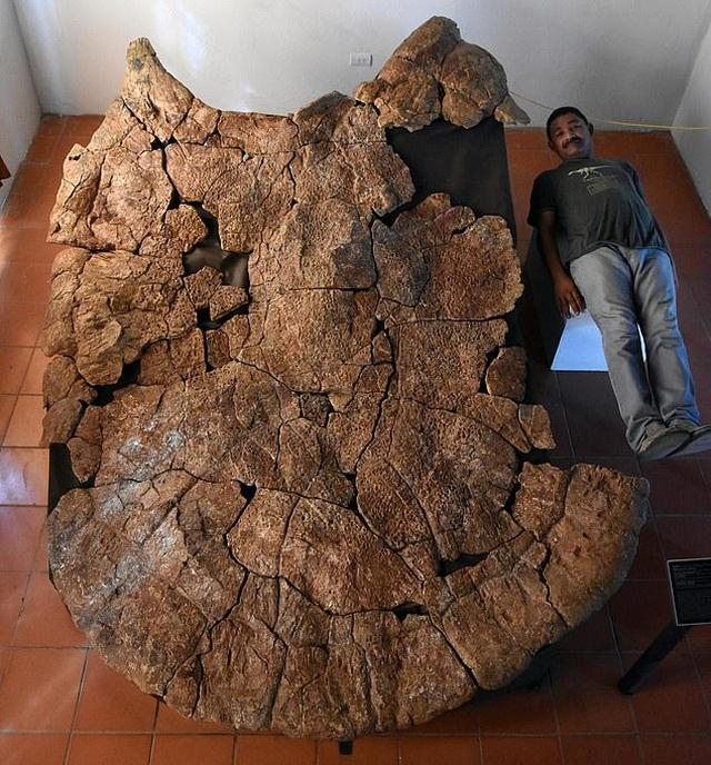 Con rùa lớn nhất mọi thời đại từng tồn tại từ 10 triệu năm trước - 2