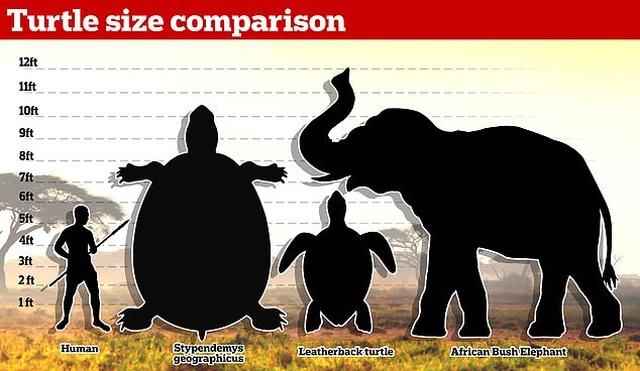 Con rùa lớn nhất mọi thời đại từng tồn tại từ 10 triệu năm trước - 3
