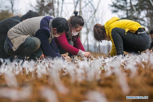 Người Trung Quốc quay trở lại việc đồng áng giữa tâm bão virus corona - 6