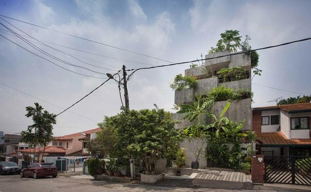 Bất ngờ ngôi nhà 3 tầng trồng hơn 40 loại cây ăn quả giữa phố thị chật chội - 1
