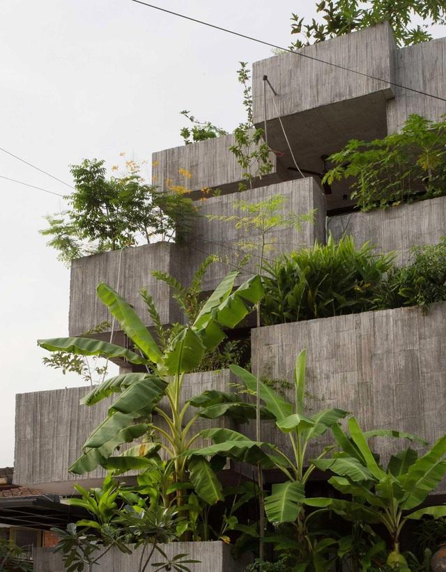 Bất ngờ ngôi nhà 3 tầng trồng hơn 40 loại cây ăn quả giữa phố thị chật chội - 2