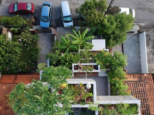 Bất ngờ ngôi nhà 3 tầng trồng hơn 40 loại cây ăn quả giữa phố thị chật chội - 3