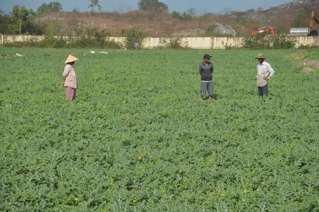 """""""Né"""" hạn mặn trong mùa khô, dân trồng cây phù hợp cho thu nhập cao - 1"""