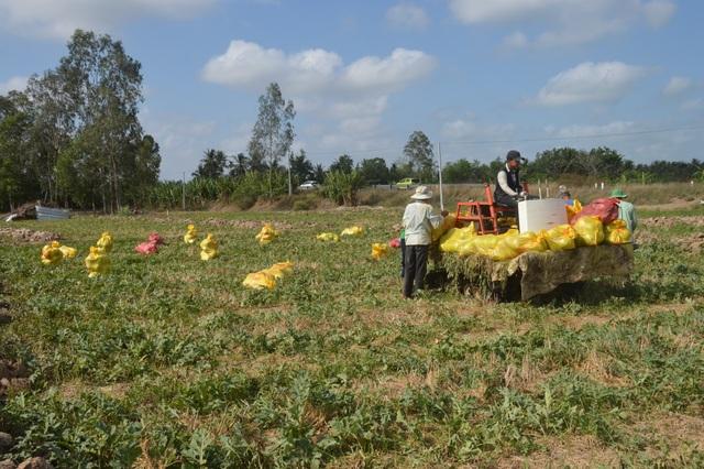 """""""Né"""" hạn mặn trong mùa khô, dân trồng cây phù hợp cho thu nhập cao - 4"""