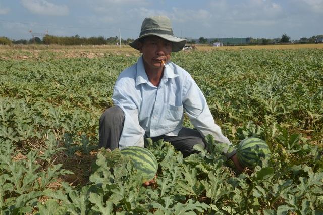"""""""Né"""" hạn mặn trong mùa khô, dân trồng cây phù hợp cho thu nhập cao - 3"""