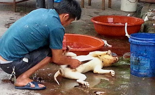 Người Trung Quốc vẫn chưa từ bỏ thói quen nguy hiểm - Ăn động vật hoang dã - 5