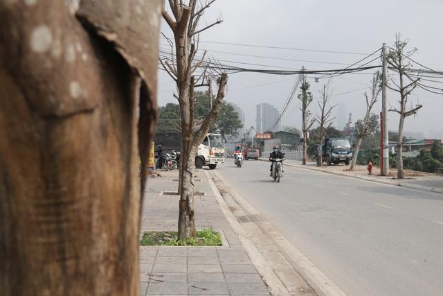 Hà Nội: Hàng trăm cây xanh chết khô trên con đường mới mở - 10