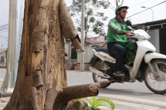 Hà Nội: Hàng trăm cây xanh chết khô trên con đường mới mở - 7