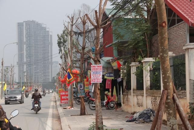 Hà Nội: Hàng trăm cây xanh chết khô trên con đường mới mở - 5