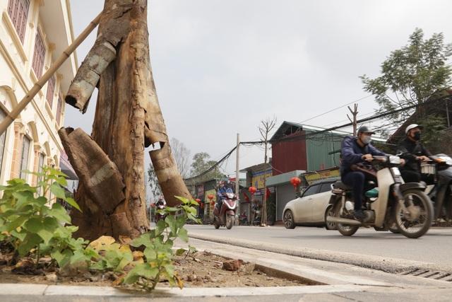 Hà Nội: Hàng trăm cây xanh chết khô trên con đường mới mở - 9