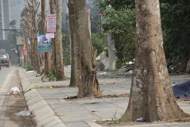 Hà Nội: Hàng trăm cây xanh chết khô trên con đường mới mở - 6