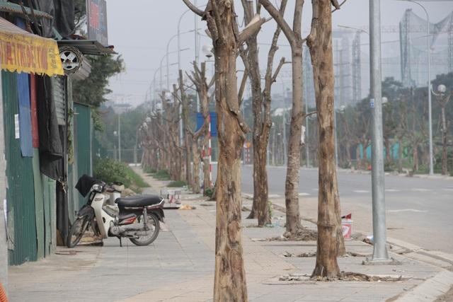 Hà Nội: Hàng trăm cây xanh chết khô trên con đường mới mở - 2