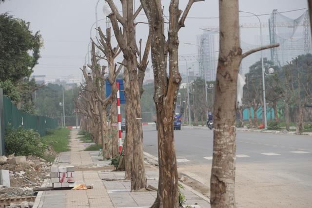 Hà Nội: Hàng trăm cây xanh chết khô trên con đường mới mở - 3