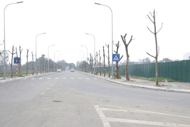 Hà Nội: Hàng trăm cây xanh chết khô trên con đường mới mở - 1