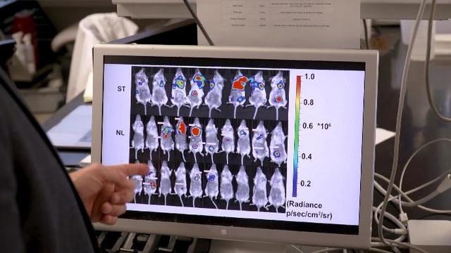 Ứng dụng công nghệ nano để tiêu diệt tế bào ung thư giai đoạn cuối - 1