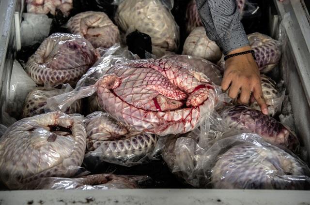 Người Trung Quốc vẫn chưa từ bỏ thói quen nguy hiểm - Ăn động vật hoang dã - 3