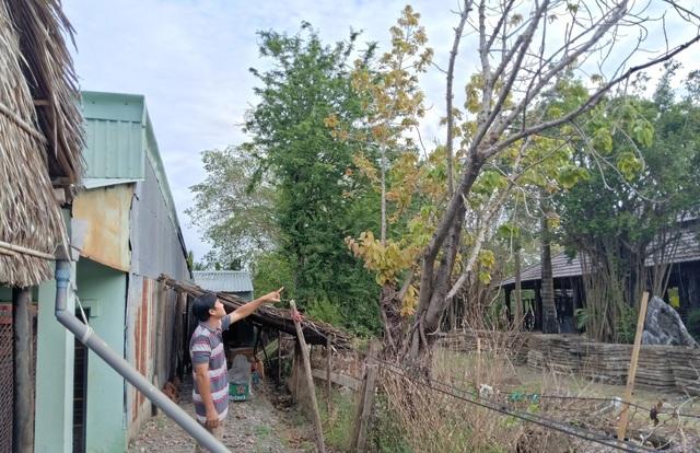 Diễn tiến ly kỳ vụ chặt cây trên đất đã mua suýt ngồi tù tại Kiên Giang - 4