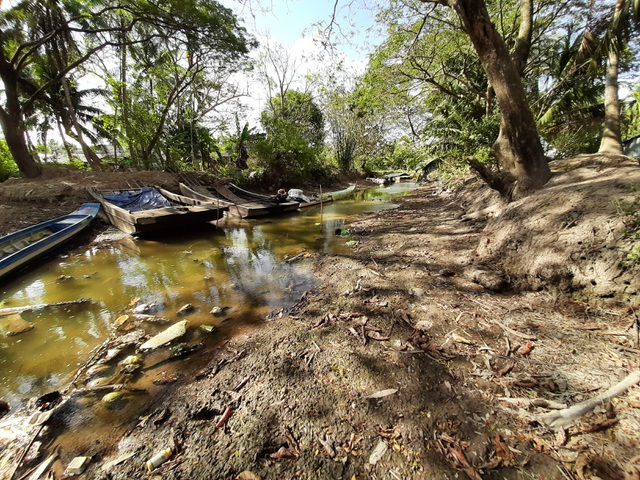 Thiếu nước ngọt, dân đánh liều bơm nước nhiễm mặn… cứu lúa - 8