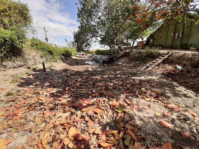 Thiếu nước ngọt, dân đánh liều bơm nước nhiễm mặn… cứu lúa - 11