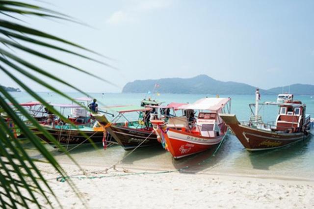 """Lợn rừng """"minh tinh"""": Điểm nhấn trên bãi biển Koh Samui - 2"""
