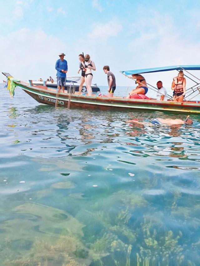 """Lợn rừng """"minh tinh"""": Điểm nhấn trên bãi biển Koh Samui - 3"""