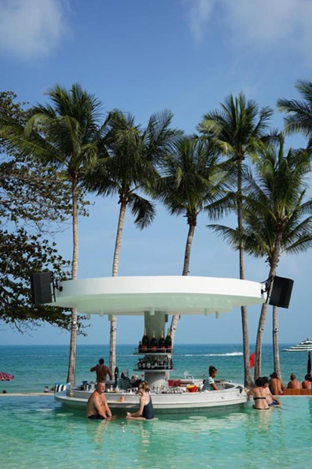 """Lợn rừng """"minh tinh"""": Điểm nhấn trên bãi biển Koh Samui - 7"""