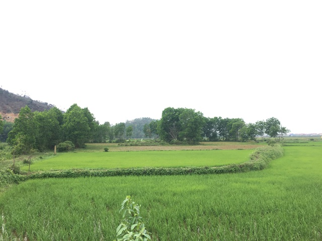 Trại giết mổ tập trung bị phản ứng vì quy hoạch gần chùa cổ tại Quảng Bình - 1