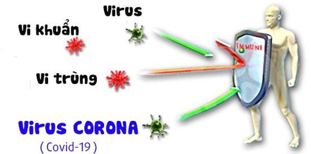 Virus corona (Covid-19) sống sót trong nhiệt độ bao nhiêu? - 2
