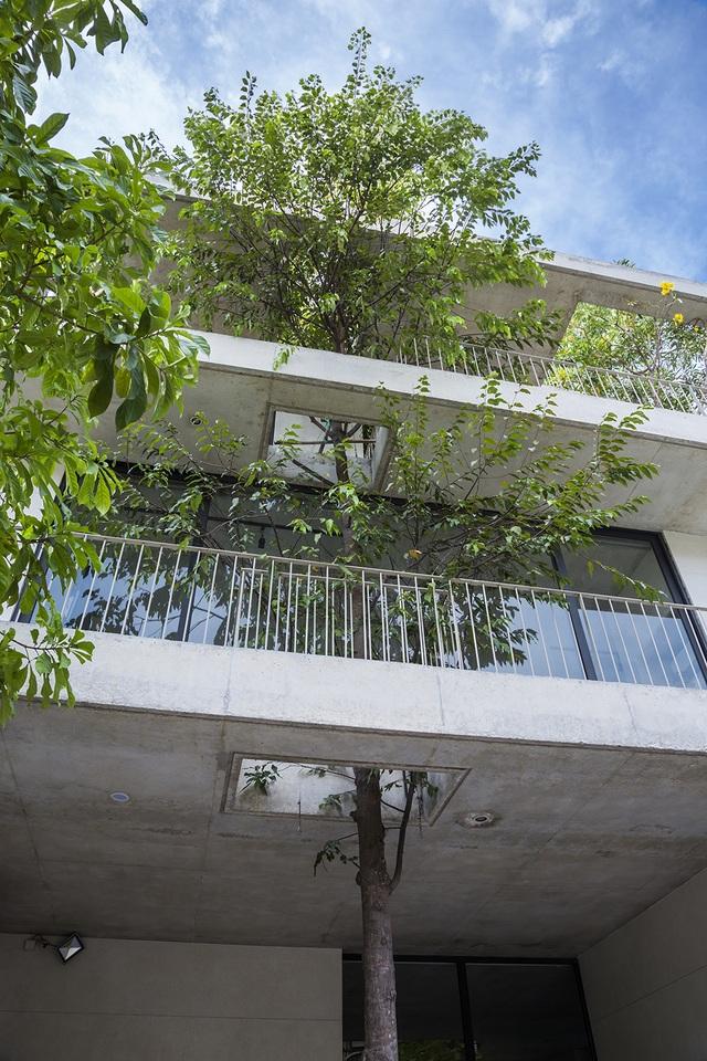 Biệt thự ở Sài Gòn gây ngỡ ngàng bởi thiết kế cây mọc xuyên mái nhà - 7